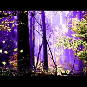 fairy-forest-violet3