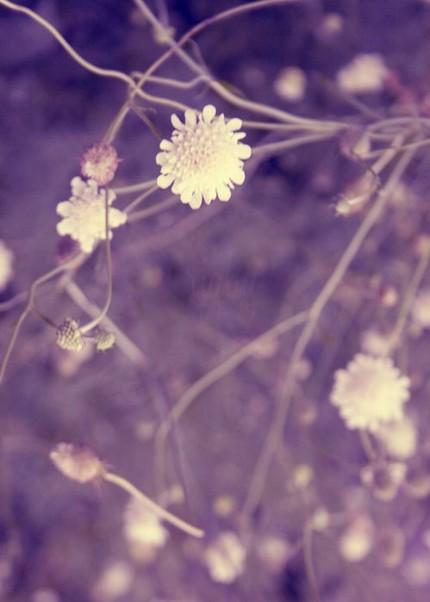 Amandina violee sans capote par deux clochards - 1 7