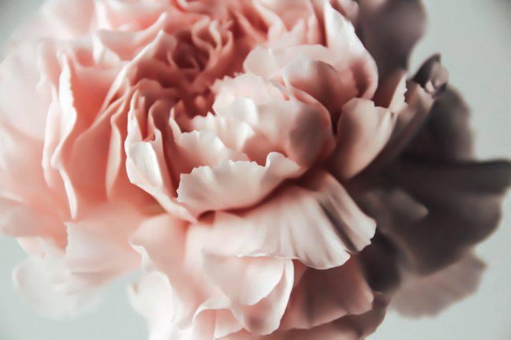Flora flower